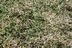 在充分构筑的夏天竹叶子灌木 免版税库存图片
