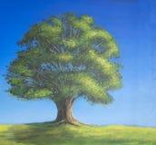 在充分的叶子的橡树在单独站立的夏天 免版税库存图片