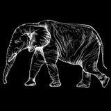 在充分的成长的剪影大象 库存照片