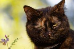 在充分的框架的一只俏丽的猫 免版税库存照片