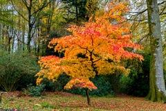 在充分的秋天颜色的树 库存图片