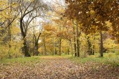 在充分的辉煌的秋天 库存照片