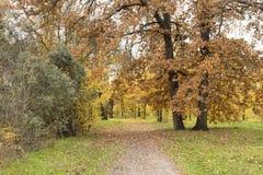 在充分的辉煌的秋天 免版税图库摄影