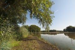 在充斥以后的河沿森林 免版税库存图片