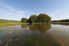 在充斥以后的河沿森林 库存图片