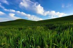在充满活力之下的蓝色鲜绿色的小山天空 库存图片