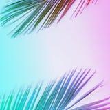 在充满活力的梯度氖颜色的热带棕榈叶 免版税库存图片