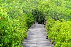 在充满活力的绿色印地安美洲红树或被激励的美洲红树森林,泰国中的长的木道路 库存图片