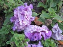在充满爱的庭院里增长的花绽放 免版税库存图片