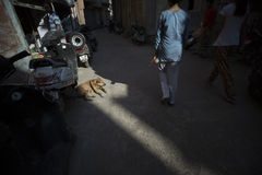 在光束的街道狗 免版税库存照片