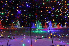 在光的圣诞树 图库摄影