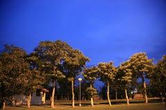 在光的晚上自然 免版税库存照片