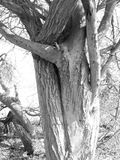 在光的黑白树皮 免版税库存图片