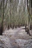 在光秃的树中的森林公路在春天 免版税库存图片