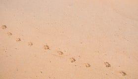 在光滑的沙子的狗脚印 库存照片