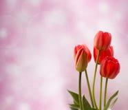 在光blured背景的五红色郁金香 免版税库存照片