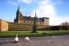 在克伦堡城堡的天鹅 免版税库存图片