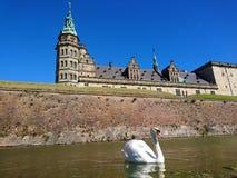 在克伦堡- Elsinor城堡,丹麦的天鹅 库存图片