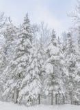 在克劳福德山谷的冬天场面 库存图片