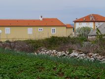 在克罗地亚海岛奥利布岛上的一个菜园 库存照片