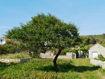 在克罗地亚海岛普雷穆达岛上的一个菜园 免版税库存图片