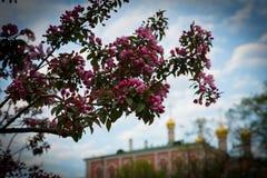 在克里姆林宫附近的开花 图库摄影
