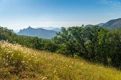 在克里米亚半岛山的森林清洁 库存图片