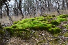在克里米亚小山的青苔 库存照片