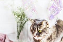 在兔子服装的一只猫 复活节 免版税库存图片