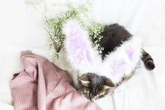 在兔子服装的一只猫 复活节 免版税库存照片