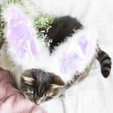 在兔子服装的一只猫 复活节 库存照片