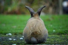 在兔宝宝之后 库存图片
