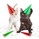 在党帽子的两只逗人喜爱的小猫 免版税库存图片