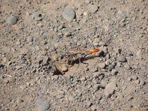 在入口的橙色飞行臭虫对孔 免版税图库摄影