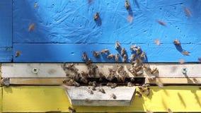 在入口的蜂对蜂房 股票录像