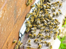 在入口的蜂蜜蜂对他们的蜂箱 图库摄影