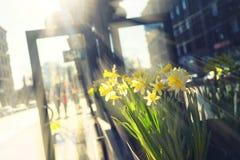 在入口的黄色花对在街道上的大厦 免版税图库摄影