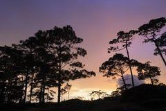 在全国生物多样性保护的美好的暮色日落 库存照片