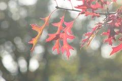 在全部的叶子在forrest的不同的颜色在Vierhouten,荷兰 免版税库存照片