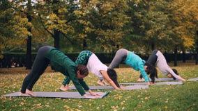 在公园做着舒展锻炼享受秋天自然、新鲜空气和体育活动的瑜伽类 福利 影视素材