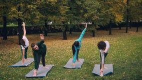在公园做着asanas序列行使和享受秋天自然和体育活动的女性瑜伽学生 股票视频