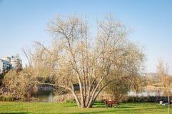 在公园单独供以人员坐长凳在树下 库存照片
