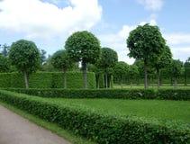 在公园圣徒Peterburg, Tsarskoye selo的被整理的树 图库摄影