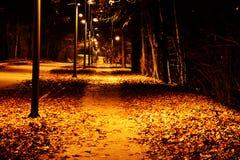 在公园在冷的12月夜 库存照片