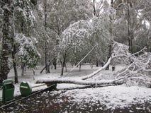 在公园在飞雪以后的冬天 免版税库存图片