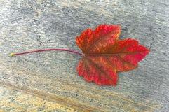 在公园室外桌上的红色秋天叶子在明亮的天 免版税库存图片