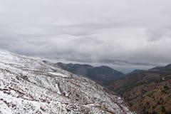 在公园工厂西班牙语附近的龙舌兰阿尔梅里雅安大路西亚cabo de desert gata横向山自然本质 免版税图库摄影