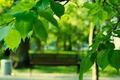 在公园换下场弄脏与在前景叶子的焦点 免版税库存照片