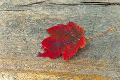 在公园木桌上的秋天mape红色叶子 免版税图库摄影