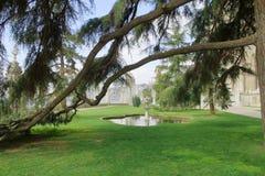 在公园树树荫下  库存照片